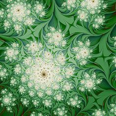 Fractals - Bloom - By Unknown Fractal Patterns, Patterns In Nature, Fractals In Nature, Queen Annes Lace, Mandala Coloring, World Of Color, You're Awesome, Fractal Art, Colorful Pictures