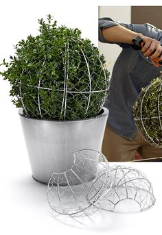 Clever way to form a topiary . . .