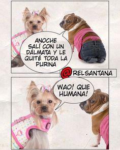 Que humana! Que humana! Que humana la cachorra!