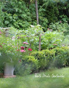 Gemüsegarten Plants, Women's Coats, Elder Flower, Plant, Planets