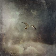 """""""Swim seagull in the sky towards that hollow western isle..."""""""