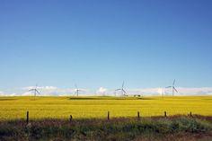 Wind Farm & Canola Field near Magrath, Alberta