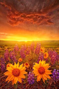*SUN FLOWER GLORY