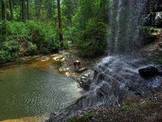 Colditz Cove State Natural Area, Jamestown, TN
