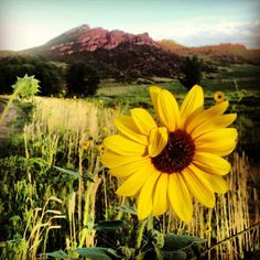 pic by Kevin Torres Loveland Colorado, Colorado Usa, Sunflowers And Daisies, Selling Real Estate, Rocky Mountains, Us Travel, Spring Time, Perfect Place, Natural Beauty