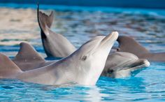 Another Aquarium Says No to Dolphin Shows.  I am getting a membership to this aquarium tomorrow!!!!!