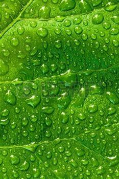 ripple effect: Drop. Stock Photo