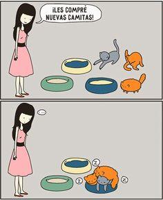 Los gatos son criaturas extremadamente extrañas. Es inútil tratar de entenderlos, por lo que solo queda aceptarlos y amar con todas sus rarezas. Yo estoy seguro de que estas situaciones cómicas son familiares a todos los dueños de estos peludos...