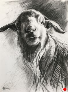 Supreme Portrait Drawing with Charcoal Ideas. Prodigious Portrait Drawing with Charcoal Ideas. Bird Drawings, Easy Drawings, Animal Drawings, Pencil Drawings, Hipster Drawings, Sheep Art, Animal Sketches, Animal Paintings, Goat Paintings
