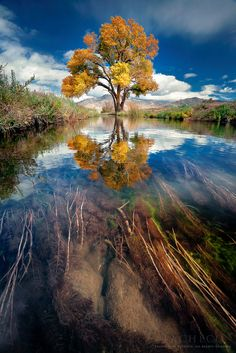 ~~Left Side Warta Warka and the Methodical Process, Bishop, California by ™ Pacheco~~