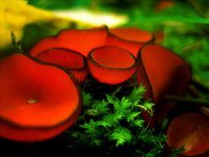 Mushrooms by *MD-Arts on deviantART