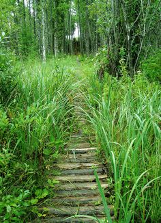 You never know where the next path will take you. You Never Know, Pathways, My Photos, Herbs, Plants, Paths, Herb, Flora, Plant