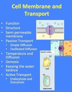This Introductory Biology PowerPoint Lesson package discusses both the Cell Membrane (structure and function) as well as the different types of transport across the membrane. It is geared towards students who are unfamiliar with both. It also provides multiple guided opportunities for the students to create Thinking Maps. It includes the lesson, 6 embedded videos, three a student activities and a student lesson handout as a word document.