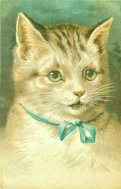 Vintage Cat Card.