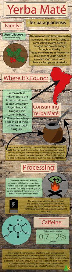 Yerba Maté — The Sunlight Experiment
