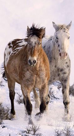 Equine not just any horse just an appaloosa