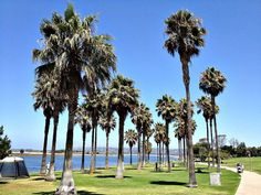 Head to Seaport Village for some window shopping and palm trees - a #SoCal classic. #SanDiego