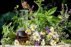 »Die Gesundheit ist wie Salz: Man bemerkt es erst, sobald es fehlt« Die meisten kennen sicherlich das Schwedenkräuter-Rezept von Maria Treben. Heute möchte ich euch jedoch das Originalrezept &#8222…