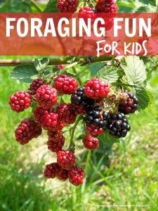 Foraging fun for kids . picking everything from blackberries to damsons, crab apples, rosehips and more, such a lovely fall activity