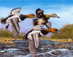 1988 Duck Stamp (Copy) by Jacqueline Brown - Acrylic