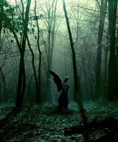 Forest angel ,Ozarks , Missouri