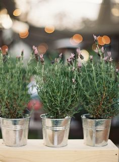 Potted Plants for Wedding Decor |   Photography: Jessica Burke | See the wedding on SMP: http://www.StyleMePretty.com/2014/01/07/farmstead-at-long-meadow-ranch-wedding/