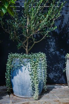 STYLE TIP - Tree Potting — Adam Robinson Design - Olive tree. A contemporary use for a classic. Image from Adam Robinson Design's Redfern Rooftop - Balcony Planters, Balcony Garden, Garden Pots, Outdoor Pots, Outdoor Gardens, Roof Gardens, Planter Olivier, Olivier En Pot, Potted Olive Tree