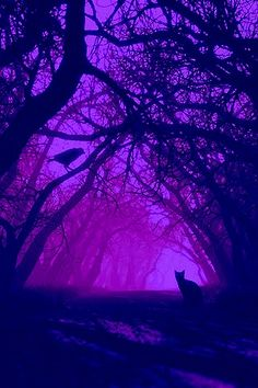 Love the color purple as light, tree silhouettes show the entanglements of emotions and family ties. Dark Purple Aesthetic, Lavender Aesthetic, Violet Aesthetic, Aesthetic Colors, Aesthetic Pictures, Purple Love, All Things Purple, Shades Of Purple, Deep Purple