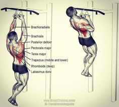 Fitness Motivation : Close neutral grip pull up. A compound pull exercise. - All Fitness Back And Biceps, Back Muscles, Weight Training Workouts, Fun Workouts, Fitness Workouts, Muscle Fitness, Mens Fitness, Fitness Bodybuilding, Biceps Workout
