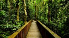 ponte de madeira floresta - Pesquisa Google
