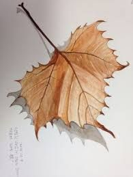 My first botanical artwork. Leaf Drawing, Painting & Drawing, Leaves Sketch, Watercolor Pencil Art, Self Portrait Photography, Coloured Pencils, Botanical Art, Rock Art, Pencil Drawings