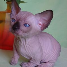 #bambino #babyOliver #babybrother Oliver is one month old ! by sphynxter