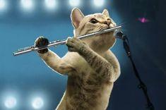 Musical cats strike a chord in 2012 calendar Crazy Cat Lady, Crazy Cats, Musical Cats, Cute Cats, Funny Cats, Baby Animals, Cute Animals, Cat Calendar, Image Chat