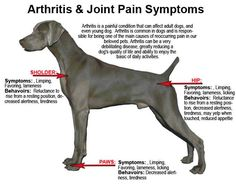 Dog with severe arthritis testimonial regimen:  * One ounce of Ningxia Red Juice per day. * One MultiGreen capsule per day. * Fish oil daily, Omega Blue. * Two BLM capsules per day * One serving of Sulfurzyme Powder per day. * Weekly Raindrop Technique Therapy