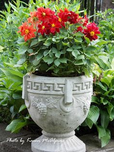 BEAUTIFUL RED DAHLIAS..POTTED IN A GREAT URN!!!
