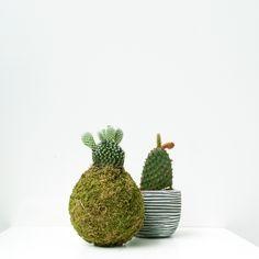 #Plante #Cactus #Kokedama