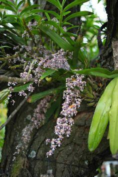 Y si estas imágenes os han gustado, seguro que os encantará esta entrada que publiqué sobre un jardín en Cuba lleno de orquídeas. El ambiente es similar,