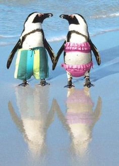 """Our Penguin Couple On The Beach Anniversary Card makes for a sweet way to say Happy Anniversary. The inside of this adorable card featuring a pair of penguins in swim suits reads """"Perfectly Suited! Ha"""