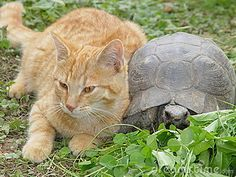 Friendship (this could be Rosie, if she had a friend who was a turtle)