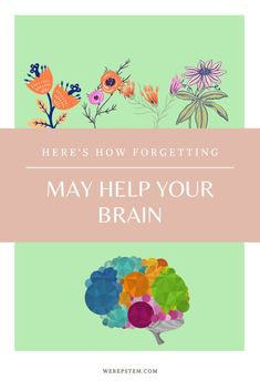 Why forgetting may make your mind more efficient - We Rep STEM Tsinghua University, Forgetting Things, Post Traumatic, Stress Disorders, University Of Toronto, On The Issues, Infancy, Autism Spectrum Disorder, Neurons