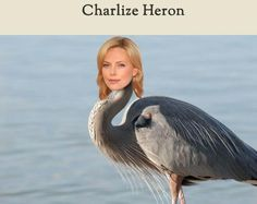 Celebirding is a blog that exists for the sole purpose of Photoshopping celebrity heads onto birds.