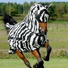 Zebramönstrat flugtäcke denna sommar kanske? Rätt fult - men har hört på omvägar att zebramönster förvirrar flygfän så de inte ger sig på hästen på samma sätt (sanningshalten i detta kan jag inte svara på...kanske är en myt). Dessvärre är det ju inte ett eksemtäcke som min häst behöver, men rolig idé!
