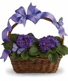 Send Your Best Wishes With A Living Gift Basket Of Eye Catching African Violets Two The Popular Houseplants Are Presented In Natural Handled