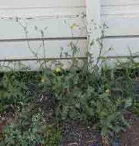 planten Outdoor Structures