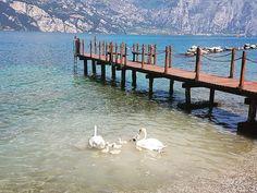 Мalcesine. Озеро Garda 🚘Частные трансферы в Альпах. Путешествуйте с нами комфортно и безопасно🚘 alpinbus.ru 🚘 alpinbus.com 🚘 Reliable transfers 🚘   #путешествия#такси#трансфер#горы#альпы#италия#лето#озеро#природа#лебеди#гарда#прогулка#солнце#отдых#отпуск #alpinbus#taxi#transfers#travel#airport#italia#lake#mountains#alps#nature#summer#gardasee#sun#bergen#see Italy, Lake Garda
