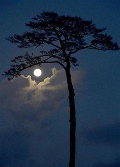 Buonanotte... e mi raccomando, fai tutto un sonno fino a domattina ; )