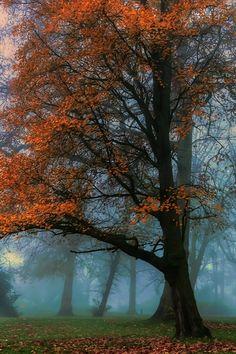 a misty autumn day