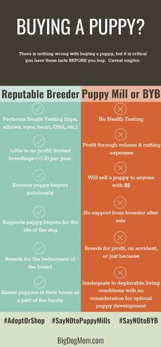 Puppy Sales Contract Free Download  Dog Stuff    Dog