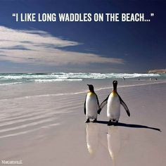 I like long walks on the beach. Penguins on a nice little date