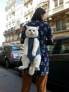 Un chat porté: Chat alors! Cat in babycarrier https://www.facebook.com/NATURIOU/photos/pb.139509919392414.-2207520000.1458764707./1178535388823190/?type=3